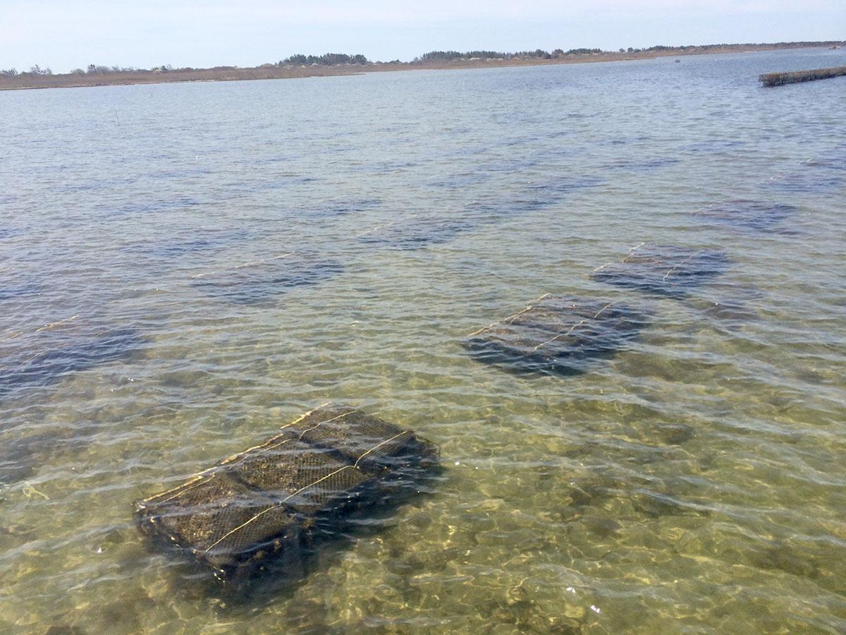 Crmc S 5 Percent Aquaculture Rule Seeks To Balance Use Of Salt Ponds